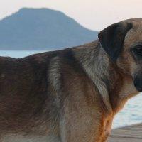 Солёный пёс. :: Маргарита ( Марта ) Дрожжина