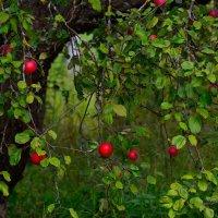 В заброшенном саду :: Miola