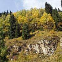 Берёзовая роща в горах. :: Игорь Ананьев
