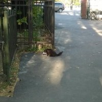 кладбищенский кот. :: Мила