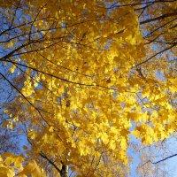 Под золотым шатром осени :: BoxerMak Mak