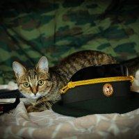 кошка партизан :: НАДЕЖДА Солодовник