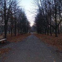 Осень... :: Светлана Гугис