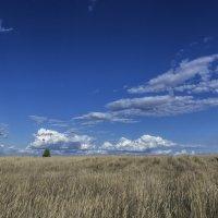 Один в поле :: Юрий Клишин