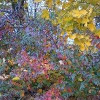 Осень рисует разноцветными мазками :: Галина
