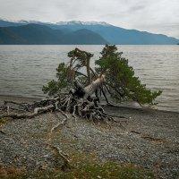 пейзаж с деревом :: сергей агаев