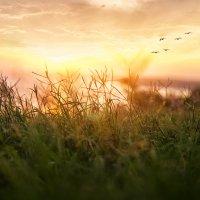 на закате :: Фотохудожник Наталья Смирнова
