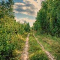 Лесными дорожками... :: марк