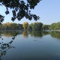 Пруд в парке осенью :: Наталья Александрова
