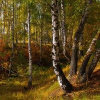 В осеннем лесу :: Роман Царев