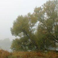 Утренний туман :: Эркин Ташматов