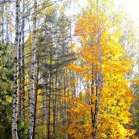 осень :: Natali Zoldi