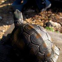 Черепаха :: Павел Зюзин