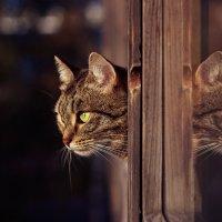 Двуглавый кот :: Chooo Сhoo0