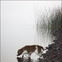 прогулка в тумане :: liudmila drake
