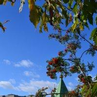 В саду горит костёр рябины красной... :: Ольга