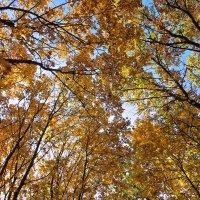 Головокружительная осень :: Татьяна Губина