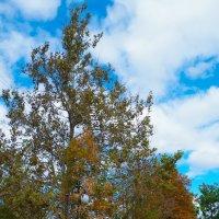 Осень в Херсоне :: Виктория Мацук