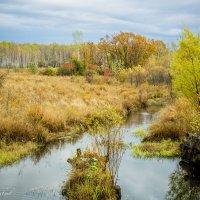 Осень.... :: Виталий Левшов