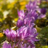 поздние цветы :: Наталья Карышева