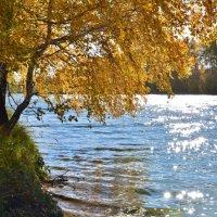 Холодная  осень :: Геннадий С.