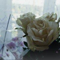Белые Розы :: Кристина Щукина