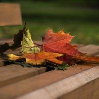 Осенний букет :: Elena Zueva