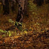 В глубине леса. :: Kassen Kussulbaev