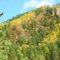 В горах Саянских  осень сказочно прекрасна! :: galina tihonova