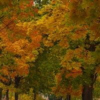 Осенняя пора :: Nikkkos Kas