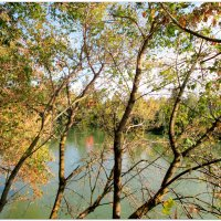 Волшебная осень... :: Тамара (st.tamara)