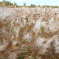 Ветер :: Gennadiy Karasev