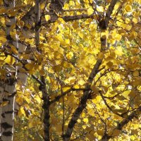 Золотая осень :: Domna Kuznechic