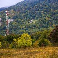 Осень в горном лесу :: Николай Николенко