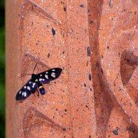 Бабочка :: Елена Даньшина