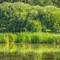 Зеленое лето :: Elena Ignatova