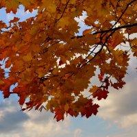 Осень рыжая. :: Тамара Бучарская