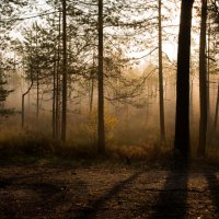 Утренний туман... :: Sergey Apinis