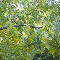 Осень :: marmorozov Морозова