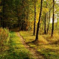 Золотая Осень в Лосином острове DSC08844 :: Андрей Лукьянов