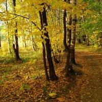 Золотая Осень в Лосином острове DSC08858 :: Андрей Лукьянов