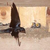 Ласточкино гнездо. :: Владимир Ворончихин