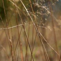 Травы...  травы... 1 :: Валерия  Полещикова