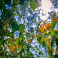 Осень на пороге :: Ksenya Morozik