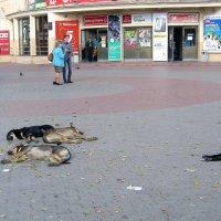 В Багдаде всё спокойно, спокойно, спокойно :: Татьяна Ломтева