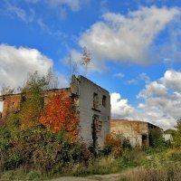 Осень :: Yuriy V