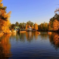 Золотая осень :: Dany Dany