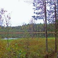 Лесное озеро :: alemigun