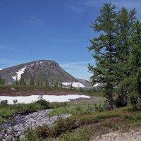 лесные места полярного урала :: Roman Габдульбаров