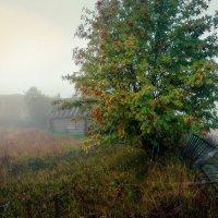 Деревня в утреннем тумане... :: Федор Кованский